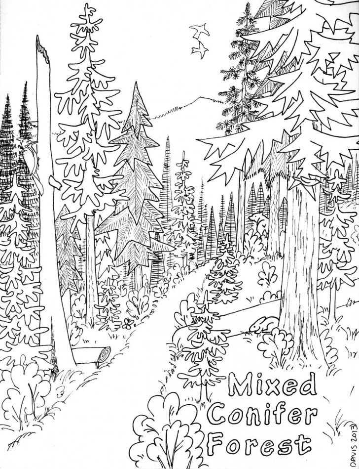 728x949 Coloring Pages Of Forest Home Jungle For Adults Deciduous Page
