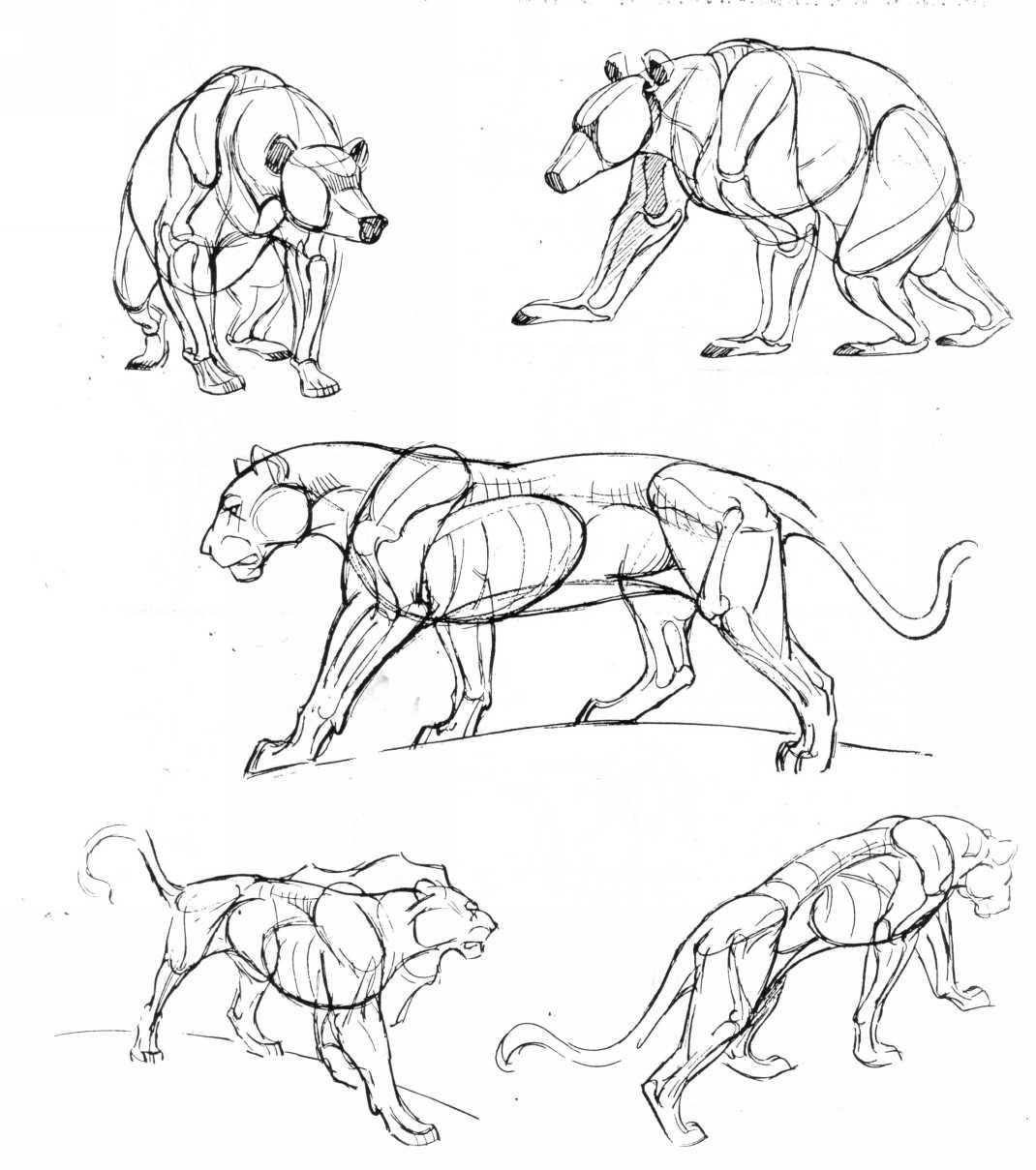 1070x1209 The Art Of Animal Drawing By Ken Hultgren Anatoref