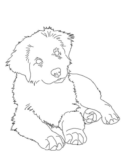 500x642 Aussie Pup Lines By Australianshepkennel