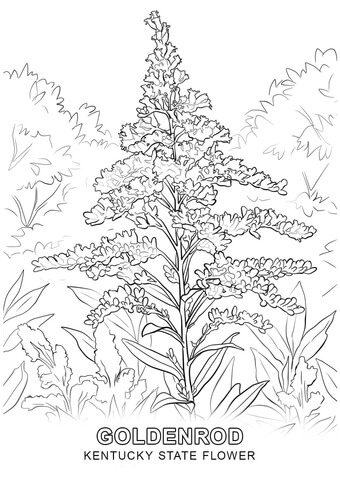 340x480 Kentucky State Flower Coloring Page Free Printable Coloring Pages