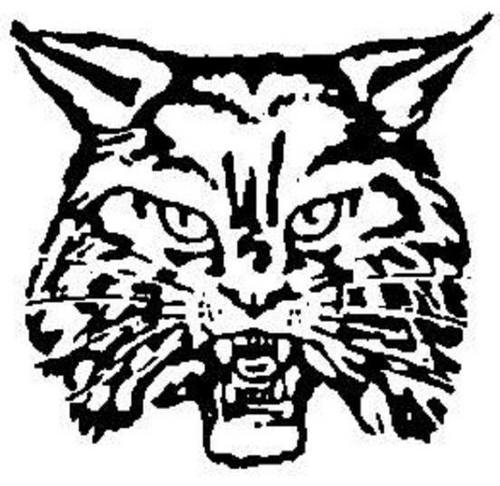 500x486 Wildcat Images Clipart Best, Outline Drawings Black And White