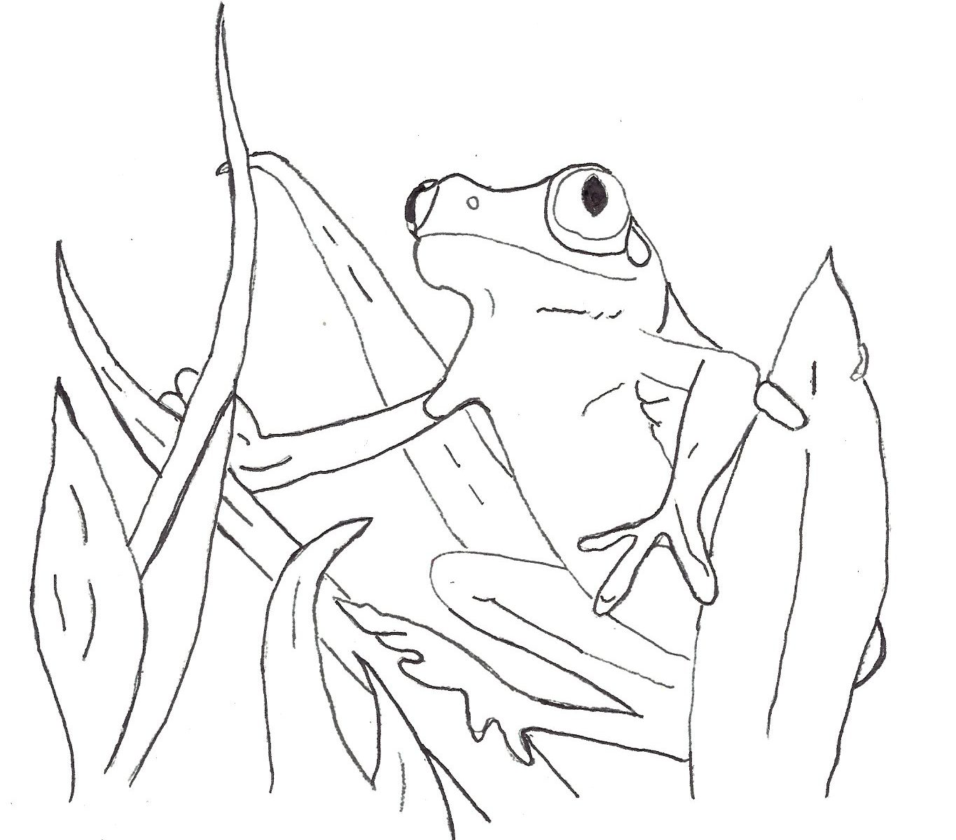 1365x1200 Kermit The Frog Is Standing Coloring Page Free Realistic