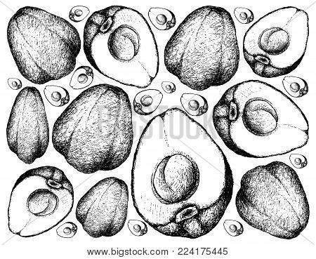 450x369 Malay Images, Illustrations, Vectors