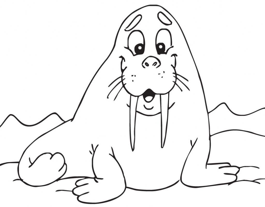 1024x799 Cartoon Drawing Walrus Cartoon Walrus Clipart