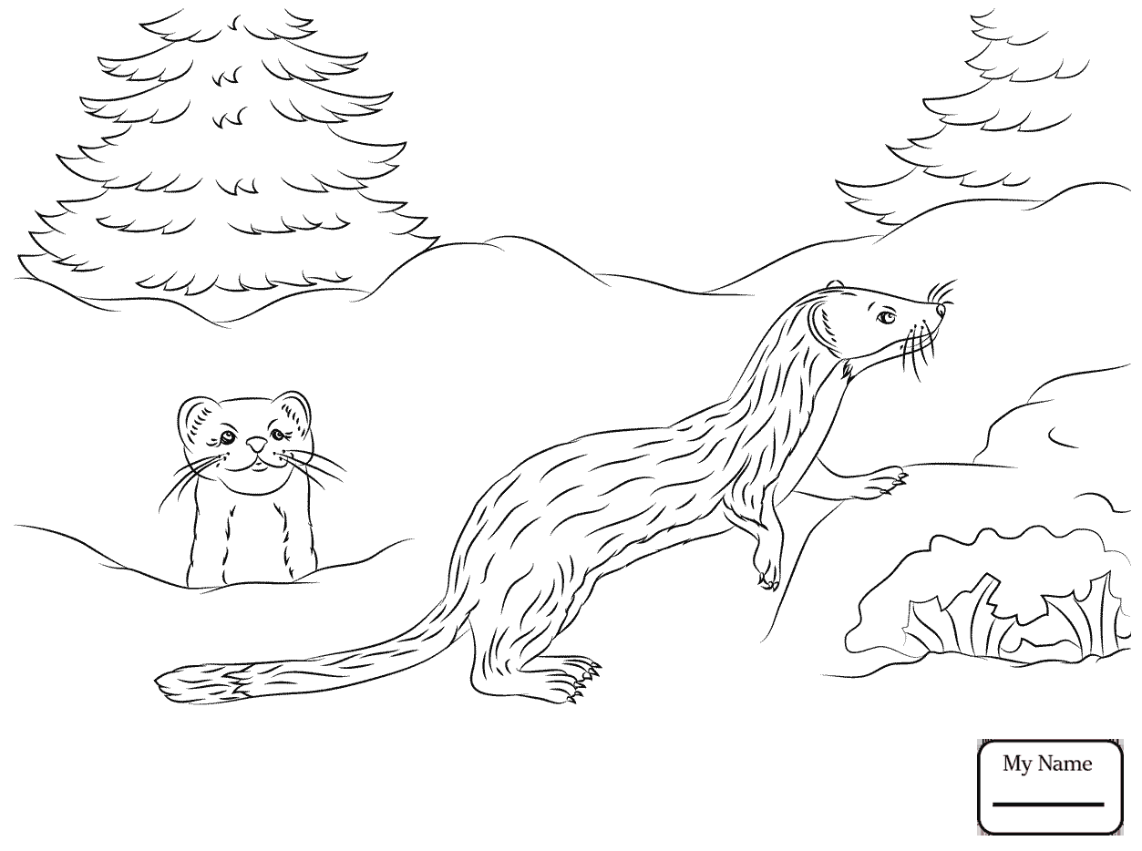 1253x934 Long Tailed Weasel Coloring Page Free Printable Least Animals