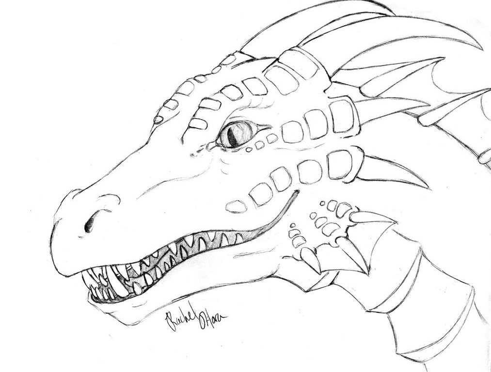 1013x768 Dragon Coloring Pages To Print Drawing For Adults Animals Ball