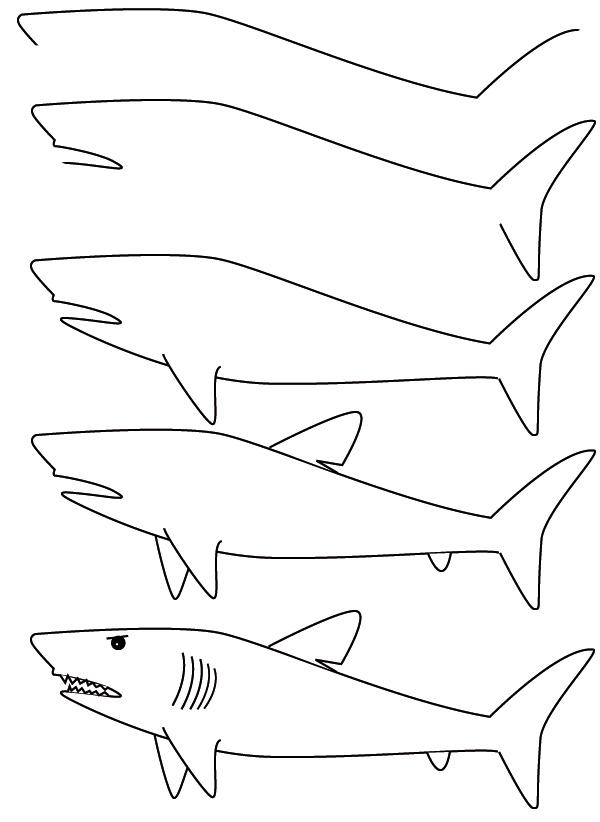 600x822 Drawing Shark