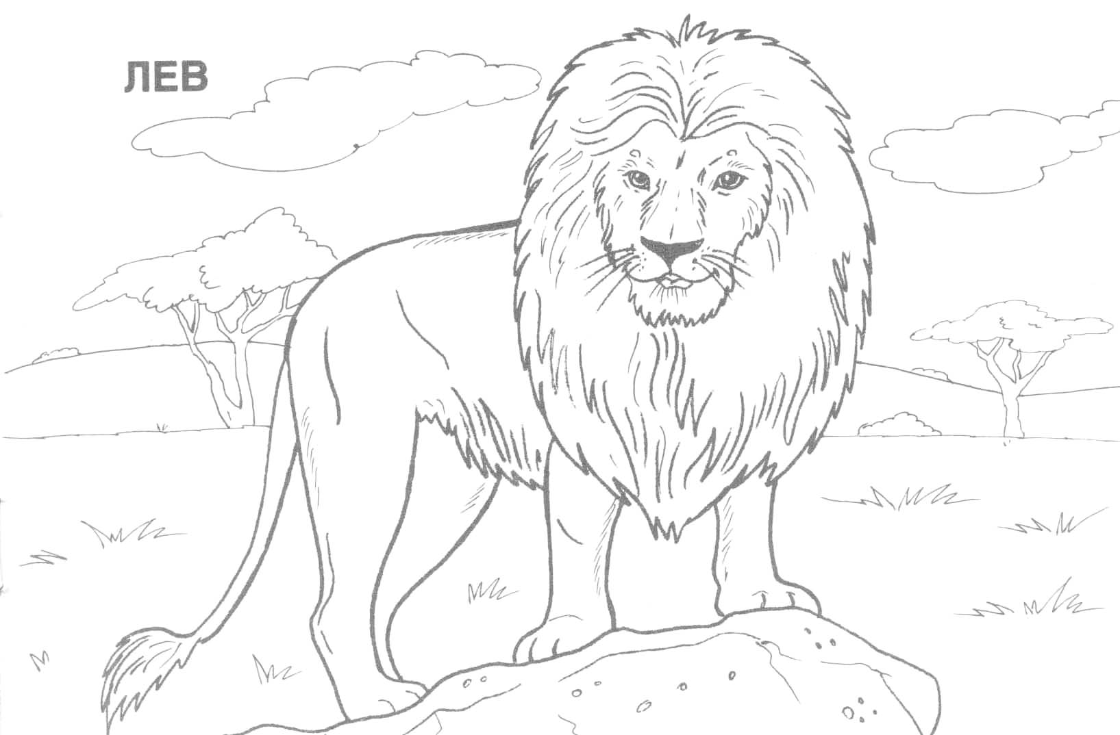 1635x1074 Free Online Coloring Pages For Kids Animals Drawings
