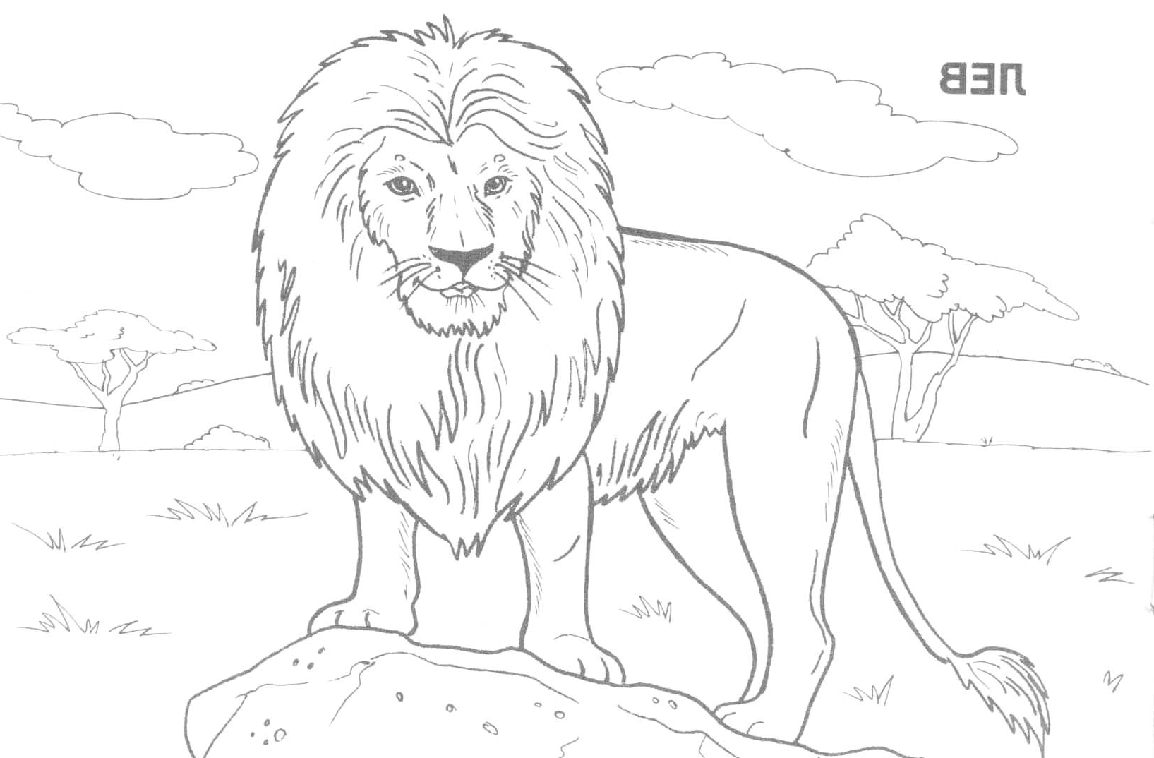 1635x1074 Wild Animal Sketch For Kid