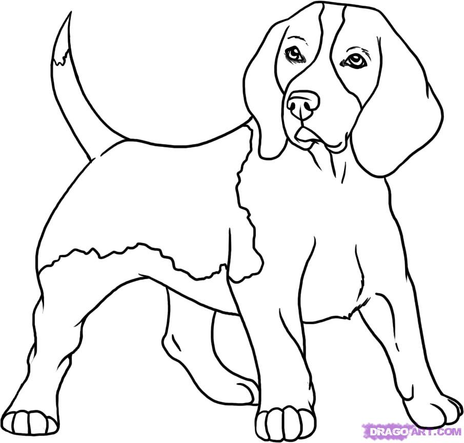 905x865 Concept Design Home Dog Drawing For Kids Images