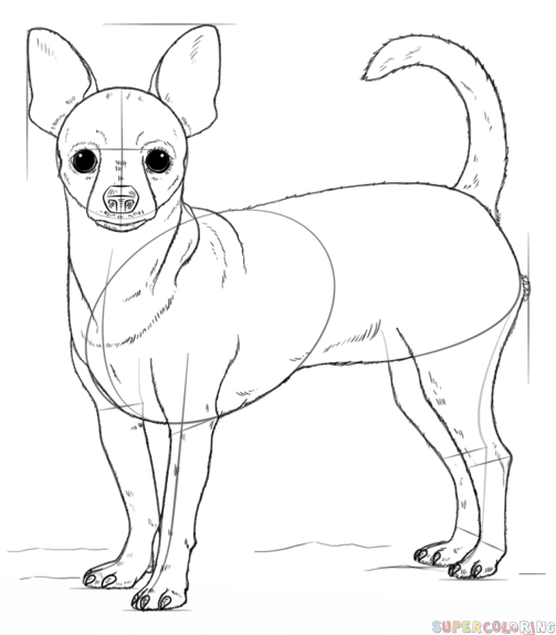 503x575 How To Draw A Chihuahua Step By Step. Drawing Tutorials For Kids