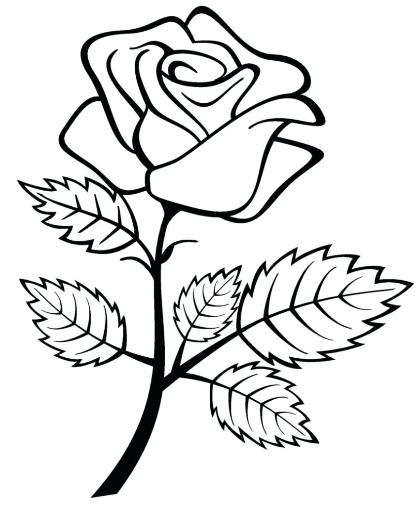 851x1024 Rose Drawing For Kids Free Printable Roses Coloring Pages Favorite