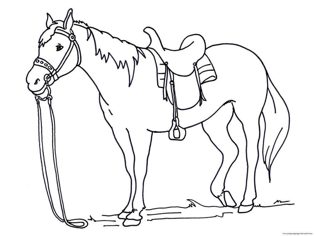 1024x768 Good Horse Coloring Pages For Kids Photograph Unknown