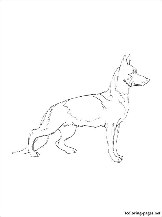 560x750 Beautiful German Shepherd Coloring Page Kids Pages Dog Sketch