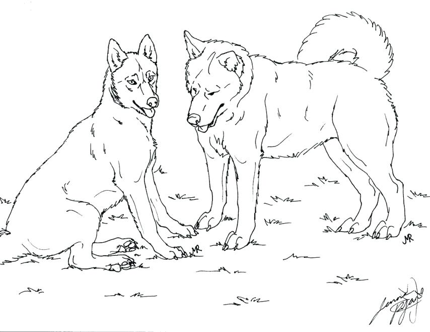 854x658 Free Husky Dog Coloring Pages Printable For Kids Realistic Best