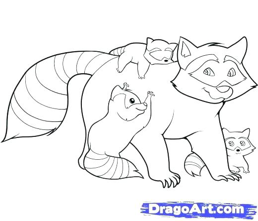 520x444 Entertaining Raccoon Coloring Pages Kids Beautiful Free Download