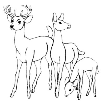 328x350 Family Deer Coloring Pages Coloring And Zentangle