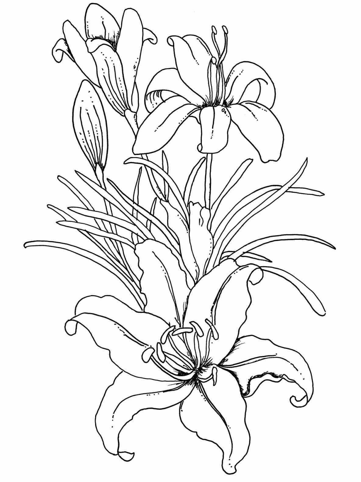 1185x1580 Drawing Flower Coloring Pages For Kids Best Pictures To Print How