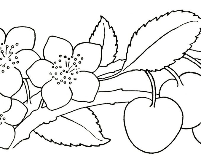 678x546 Drawing For Children Free Download Kids Coloring Page
