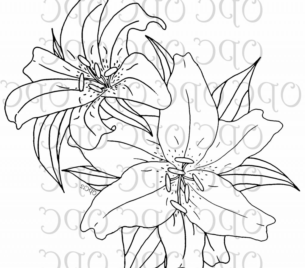 1024x900 Lily Of The Valley And Fairy Coloring Pages Page For Kids Flowers