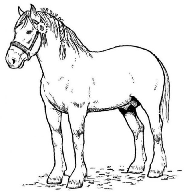 618x640 Horse Coloring Pages And Drawing For Kids So Cute