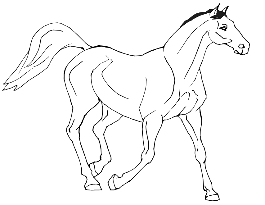 854x660 Realistic Horse Coloring Pages 337453