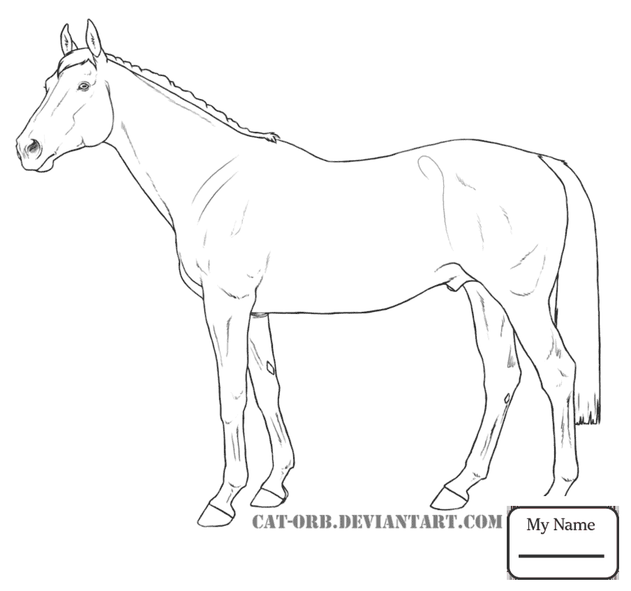 904x847 Coloring Pages For Kids Horses Mammals Heavy Warmblood Mare