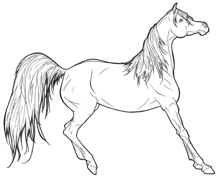 735x600 Coloring Horse Pages The Horse Coloring Book Is The Perfect Gift