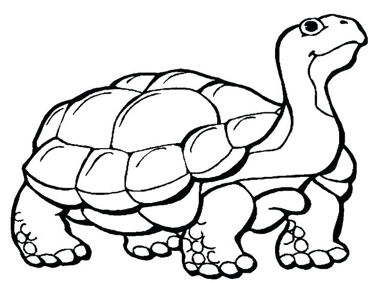 736x552 New Kids Drawing Coloring Pages For Best Turtle Coloring Pages