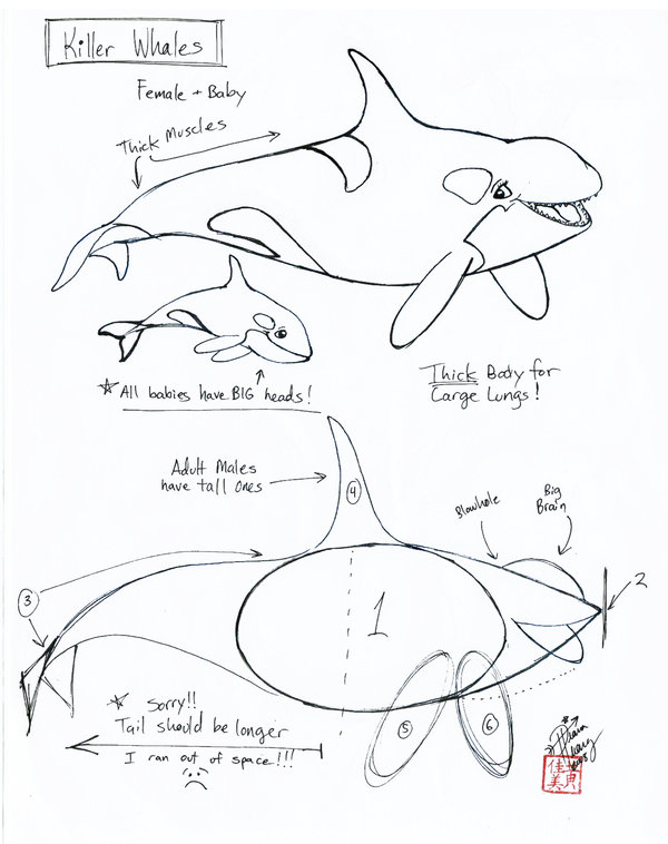 600x758 Draw A Killer Whale By Diana Huang