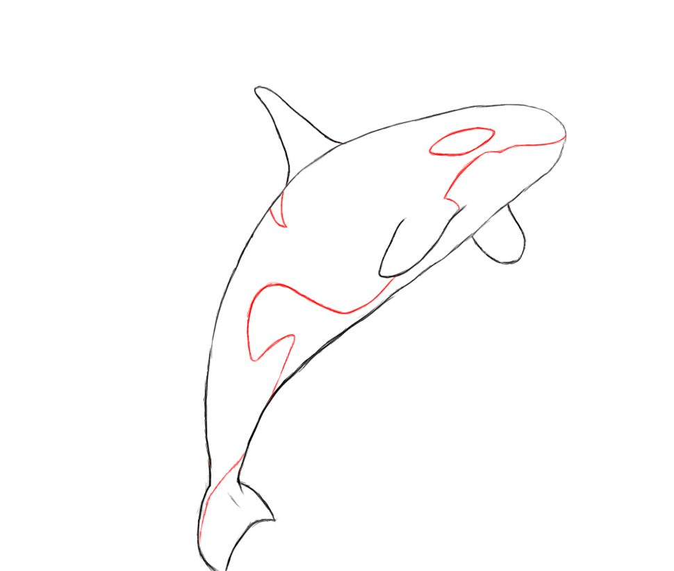 970x822 How To Draw A Killer Whale Whale Drawing, Killer Whales And Drawings