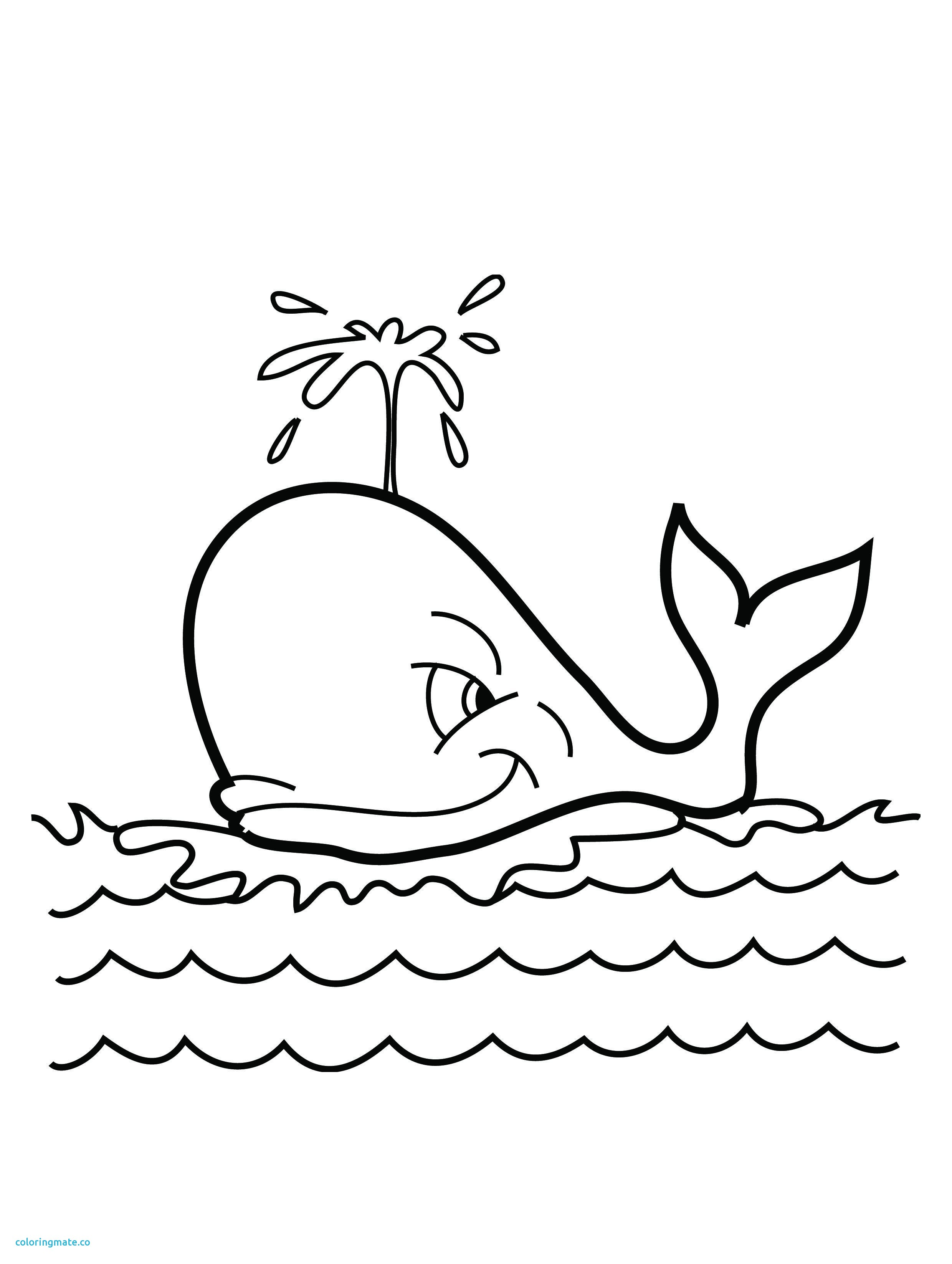 2480x3292 Killer Whale Coloring Pages Beautiful 16 Coloring Pictures Whale