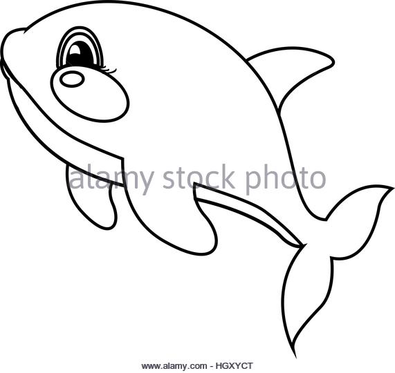 571x540 Orca Drawing Stock Photos Amp Orca Drawing Stock Images