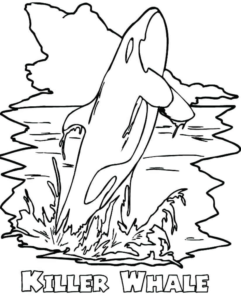 824x1024 Weird Killer Whale Coloring Pages Page Robertjhastings Net