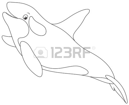 Killer Whales Drawing