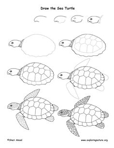 236x305 How To Draw A Sea Turtle Handout Turtle, Blog And Ocean