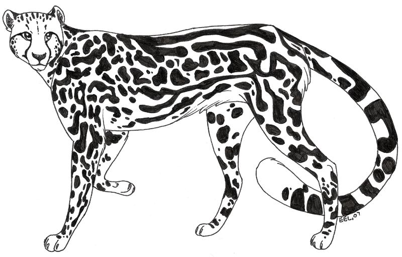 800x513 Inked Sketch