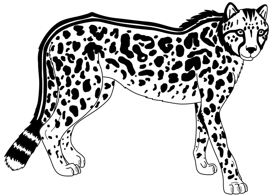 900x638 King Cheetah Lineart By Stormjumper19