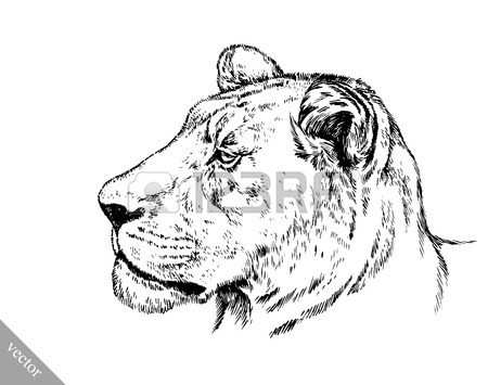 450x355 King Cheetah Stock Photos. Royalty Free Business Images