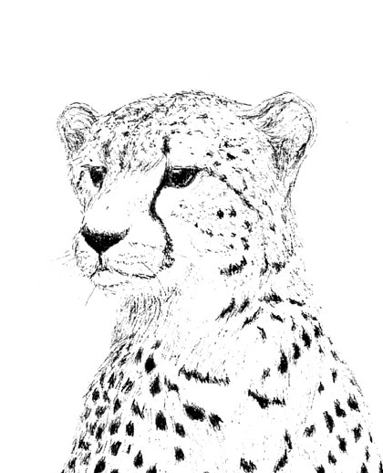 420x518 Cheetah Ink Drawing Embellished Miniprint By Donnakazo On Etsy