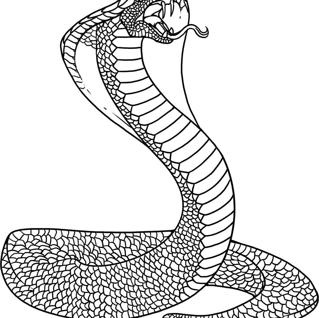 1082x1080 Drawn Cobra Coloring Page Pencil And In Free Printable Animals