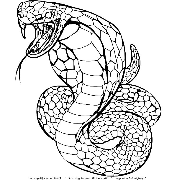 600x612 King Cobra Coloring Pages