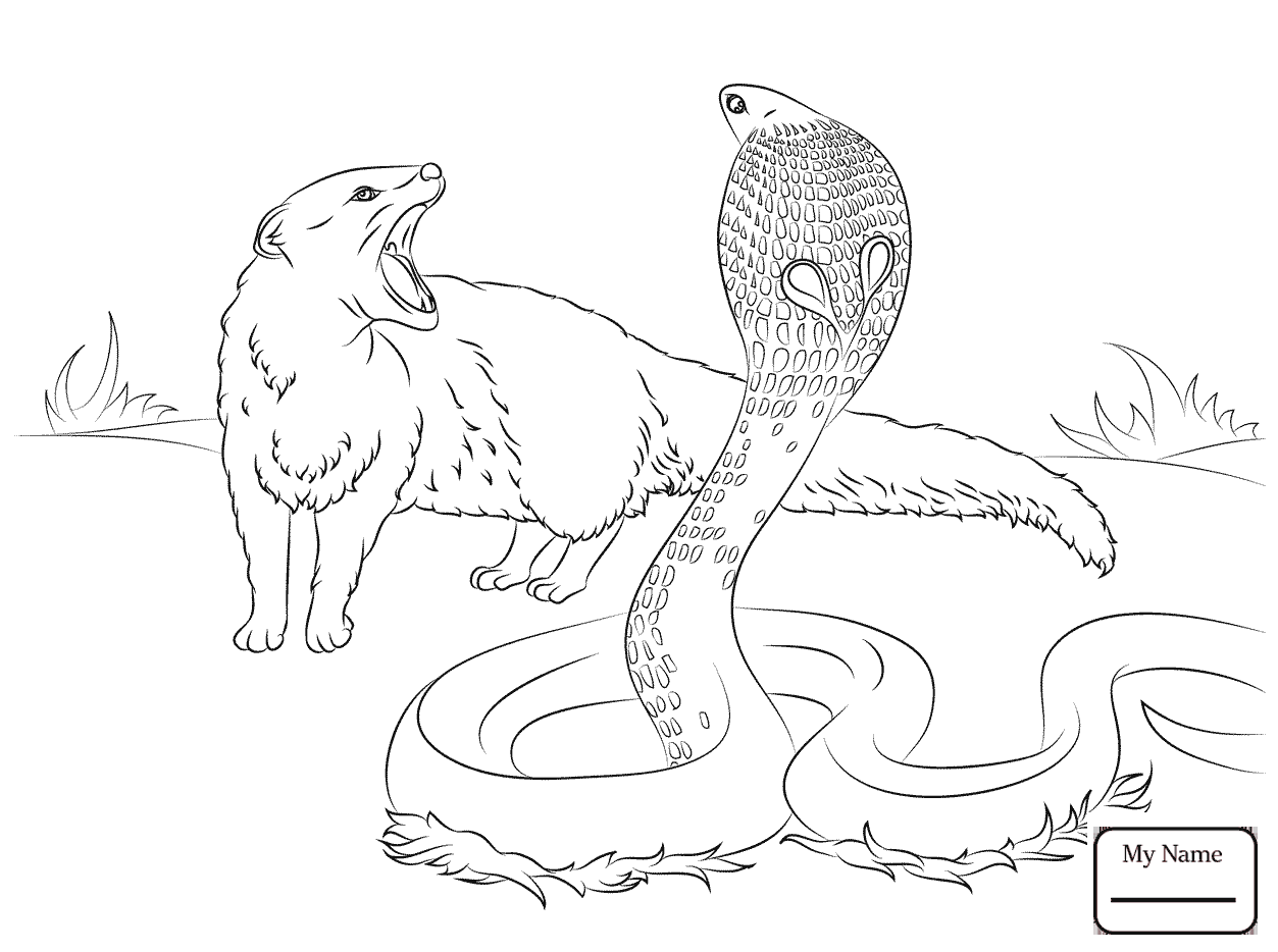 1253x934 Coloring Pages Realistic King Cobra Reptiles