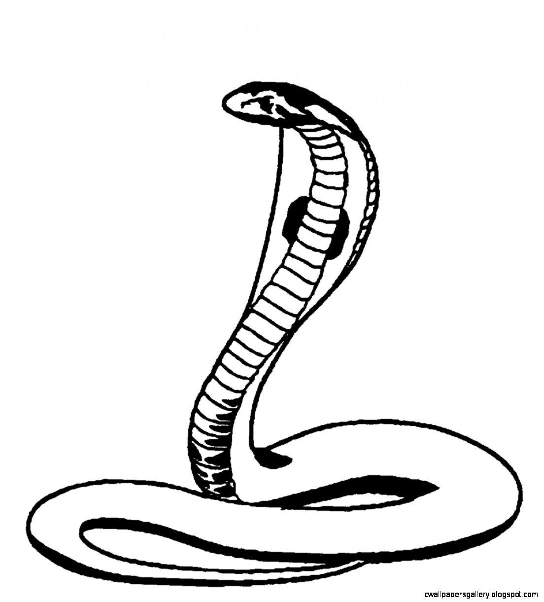 1104x1221 Cobra Snake Drawings Wallpapers Gallery