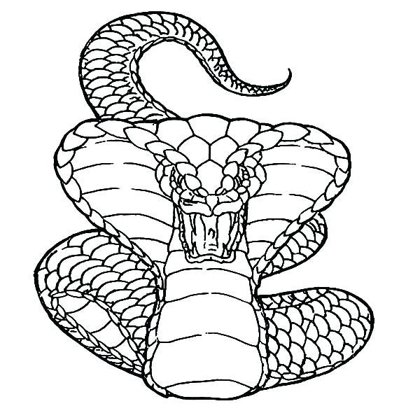 600x600 Drawing King Cobra Snake