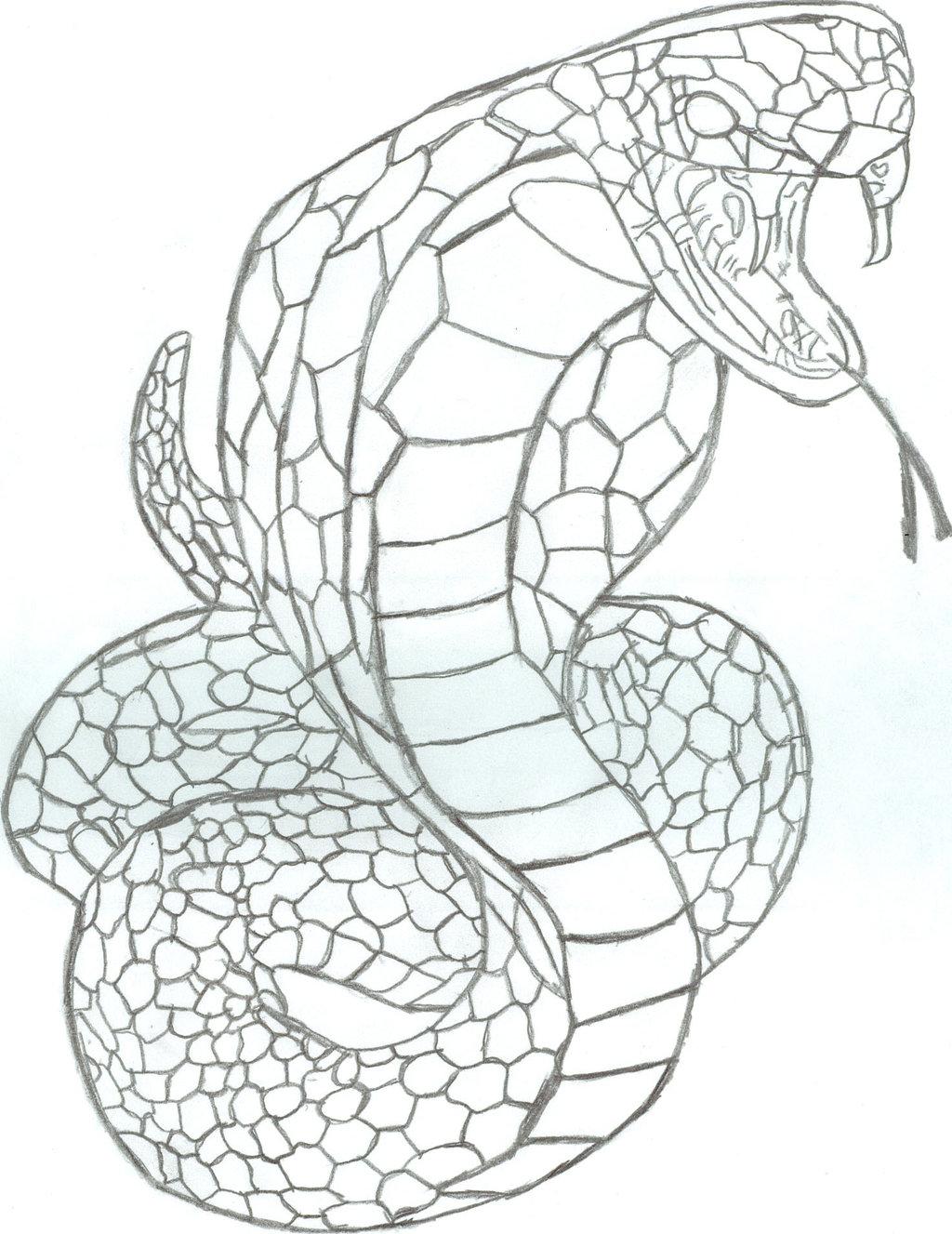 1024x1327 King Cobra Head Drawing