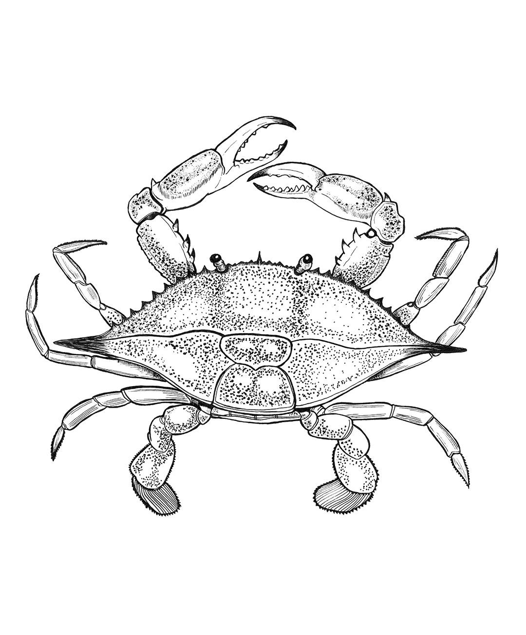 1080x1304 Louisiana Blue Crab Old Fashioned Press