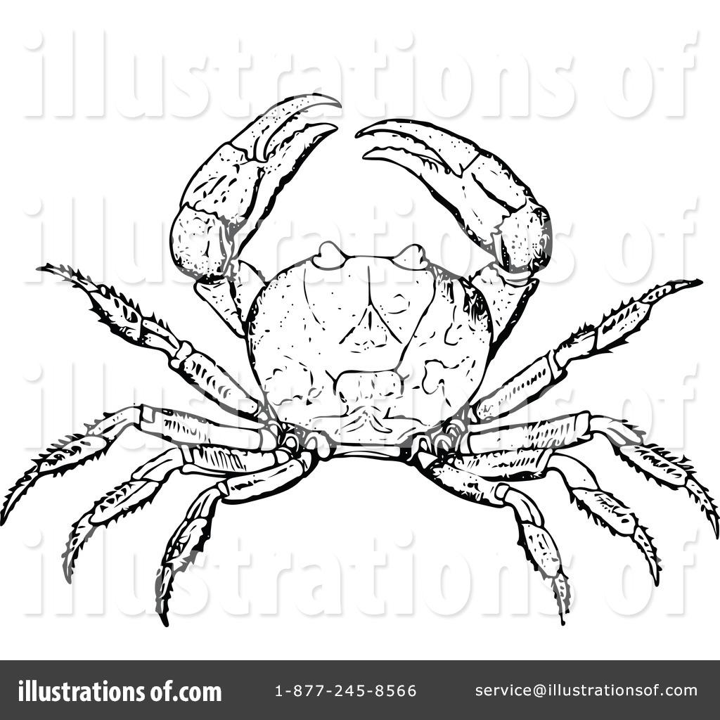 Fantastisch King Crab Anatomy Galerie - Anatomie Von Menschlichen ...