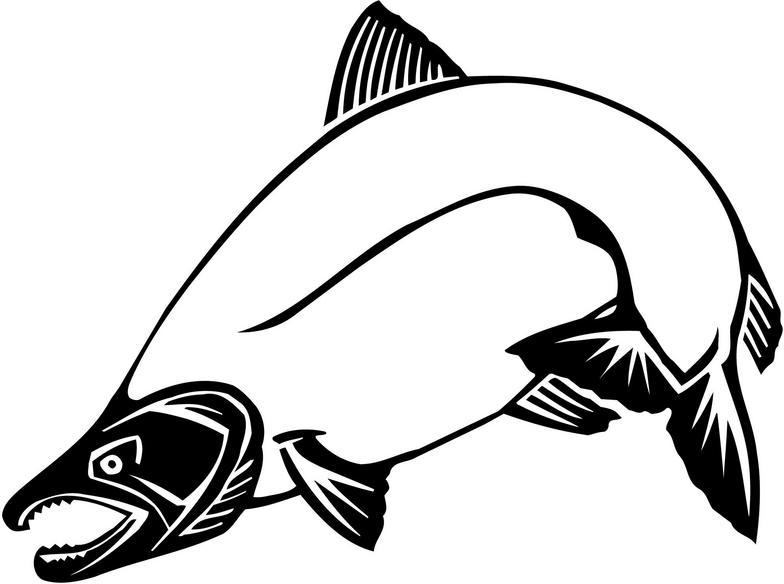 784x584 King Salmon Clipart