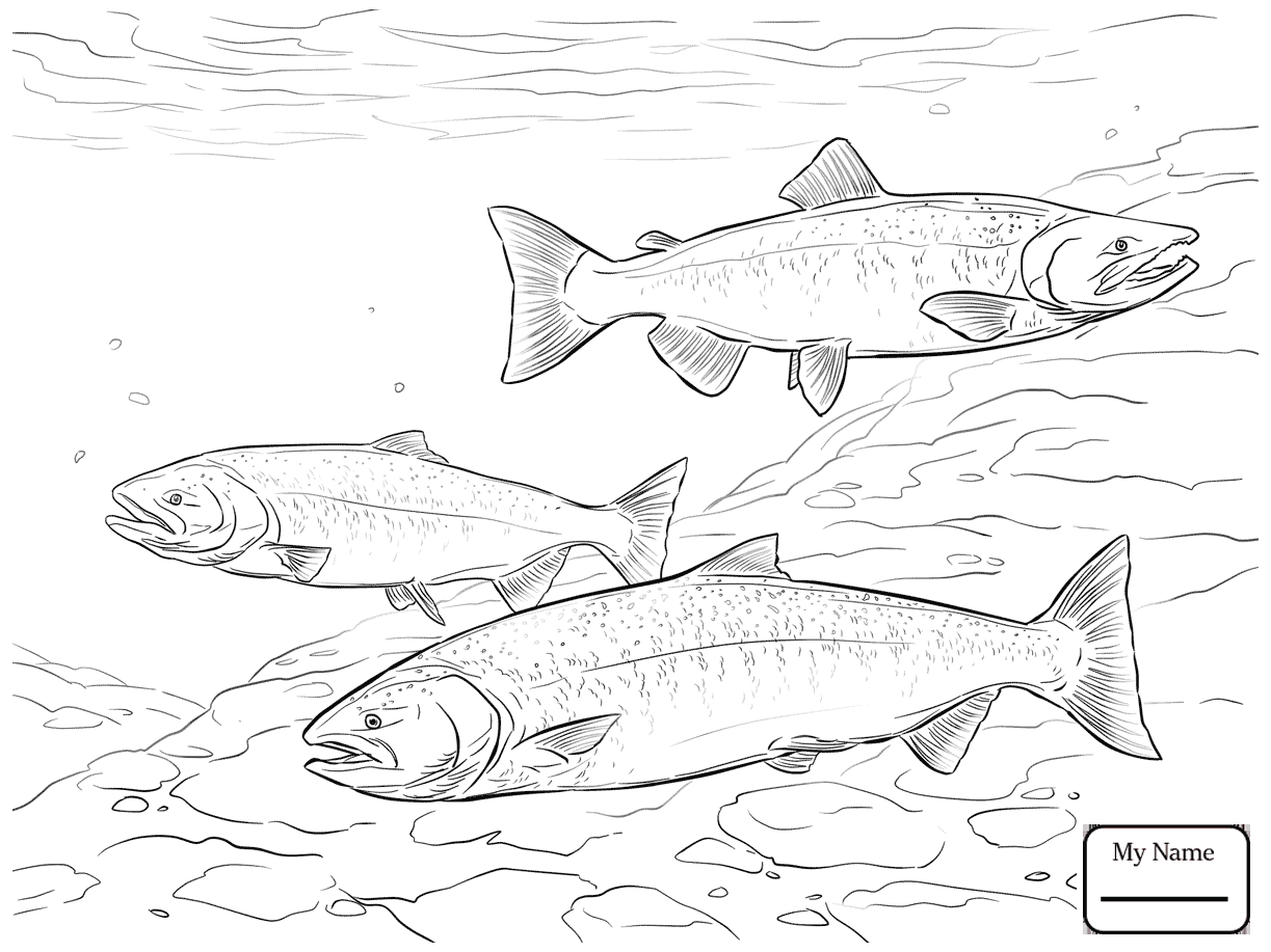 1223x917 Coloring Pages For Kids Atlantic Salmon Shoal Fish
